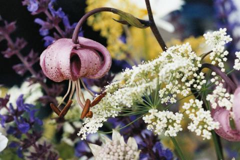 花粉过敏的人送干花,也会导致过敏吗?