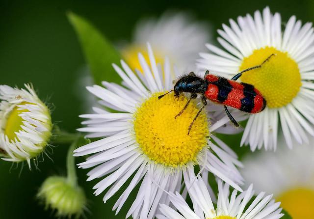 什么鲜花花粉会比较少