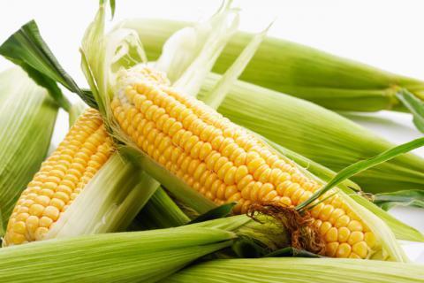 蛋白玉米减肥,你一定不知道