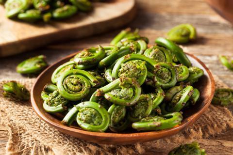 蕨菜吃了对身体有害嘛