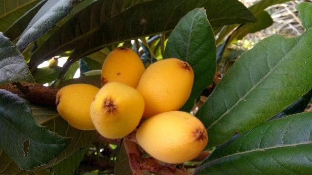 吃什么水果清热解毒有益消肿