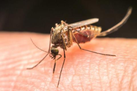 夏天蚊子多怎么预防