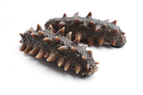 泡发后的海参能放多久,泡发海参的生涯措施,防止铺张就要从食材生涯泉源