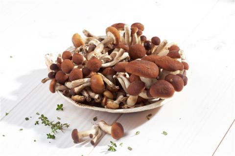 吃茶树菇好处多,这样吃茶树菇更好吃?