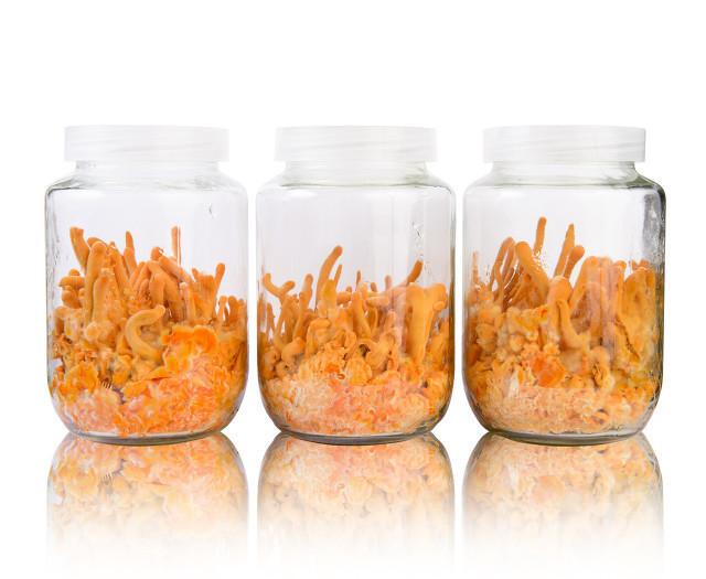 虫草花煲汤怎么搭配好喝?虫草花煲汤需要注意这些