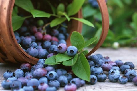 �{莓�I�B�s不能多吃,�{莓的功效�c作用