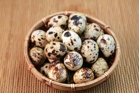 鹌鹑蛋和鸡蛋吃哪个好?鹌鹑蛋的营养价值