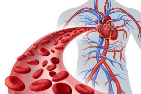 对血液循环好的食物,促进血液循环的方法
