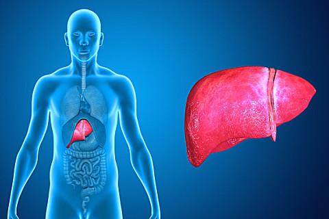3种养护肝脏好植物