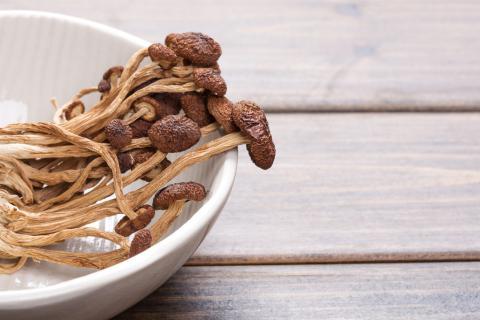 泡发茶树菇要多久?泡发茶树菇有技巧