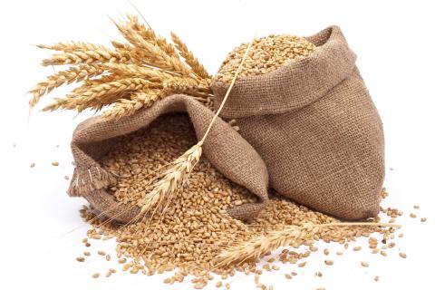 如何区分小麦和大麦