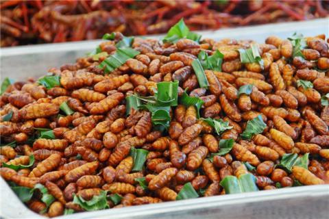 蚕蛹有哪些营养价值?蚕蛹食用指南请查收
