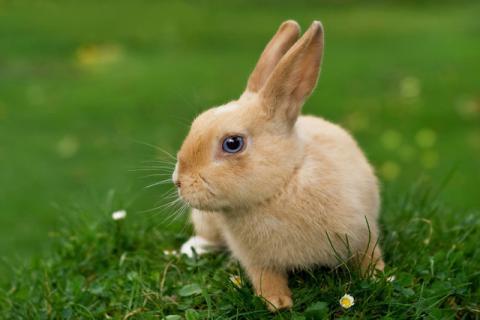兔肉怎么去腥味?兔肉不适合与什么同食?