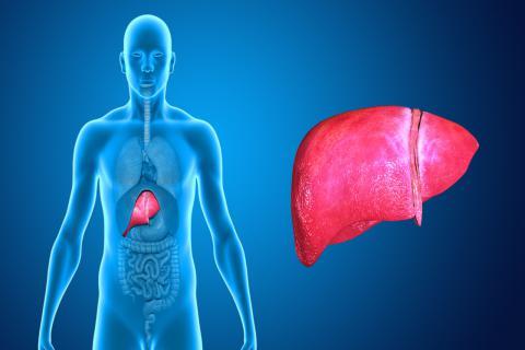 春季吃什么养肝?抓紧时间养肝有益健康