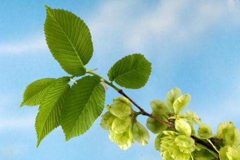 春季补阳气吃什么?春季适合滋补