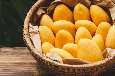 孕妇可以吃芒果吗?孕妇吃芒果的好处和注意事项