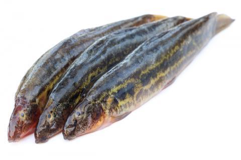 泥鳅土腥味怎么去除?泥鳅一定要去除身上的粘液吗?