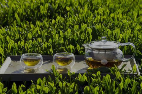 绿茶可以天天喝吗?喝绿茶有什么好处?