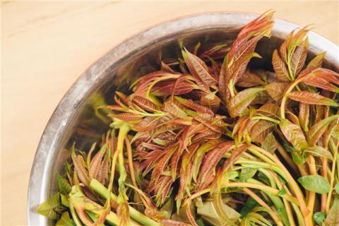 香椿嫩芽怎么吃好吃?香椿嫩芽的营养功效