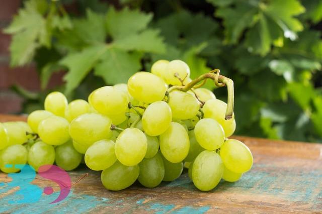 不熟的葡萄可以吃吗