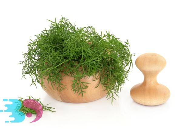 茴香菜的功效与作用