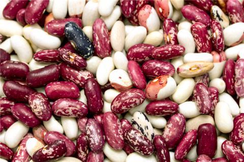 芸豆的功效与作用