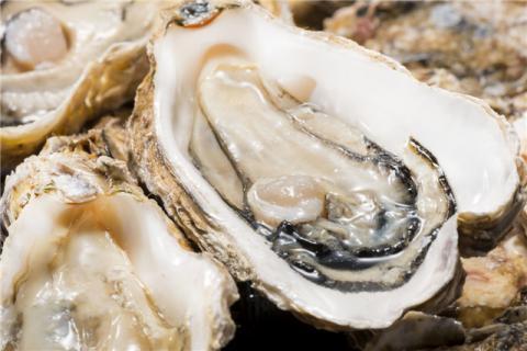 海蛎子功效和禁忌