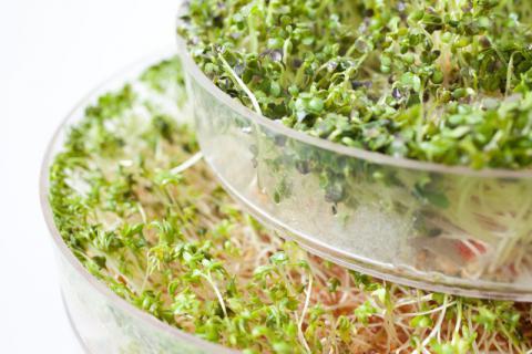 怎样做绿豆芽好吃