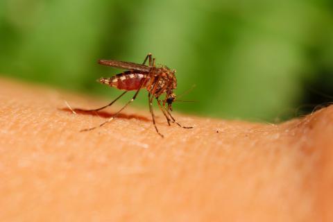 除蚊子最好的方法,哪些人比较招蚊子?