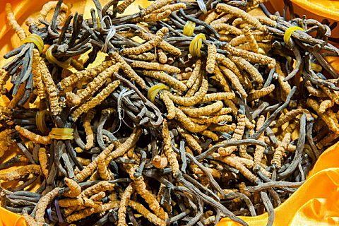 虫草的功效与作用,虫草怎么吃才好?