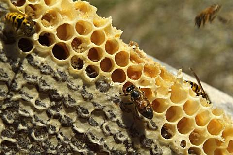 蜂蜡的食用方法
