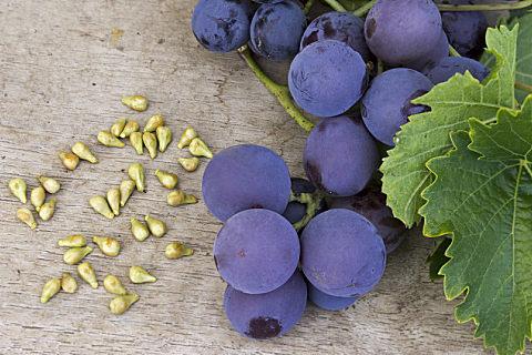 如何区分葡萄和提子
