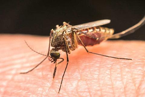 被蚊子叮了怎么止痒