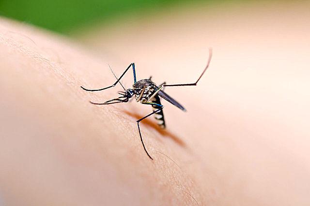 秋天的蚊子为什么厉害?秋天怎么驱蚊?