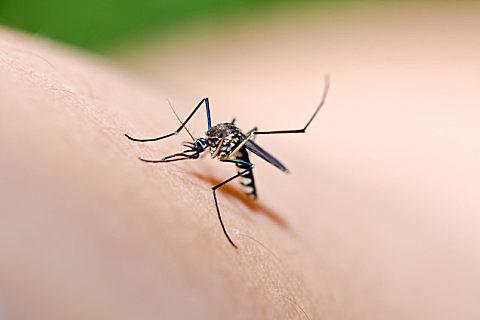 秋天的蚊子为什么厉害
