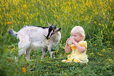哪些宝宝适合喝羊奶粉