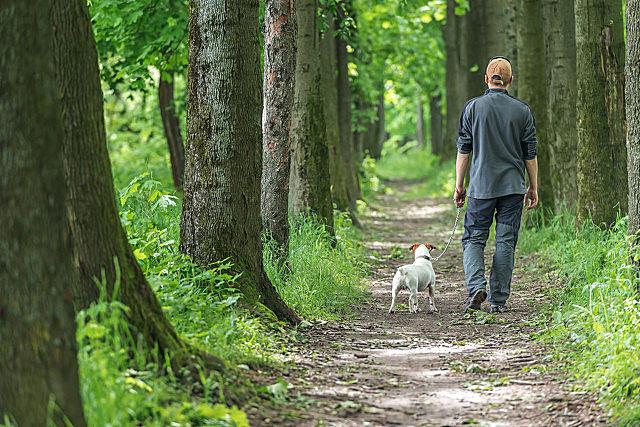 什么时间散步比较好