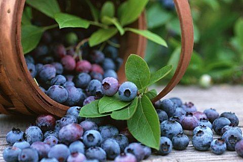 蓝莓一天吃多少合适?蓝莓吃多了有什么坏处?