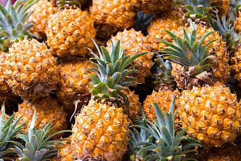 香水菠萝和普通菠萝有什么区别
