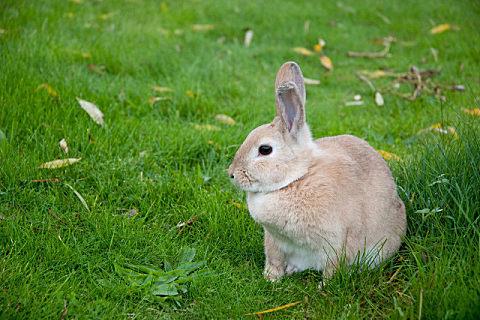 兔肉不能和什么食物一起吃
