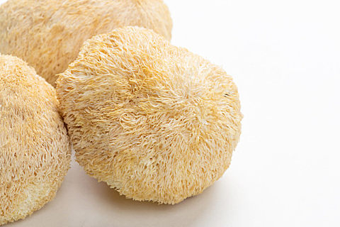 怎么挑选高质量的猴头菇