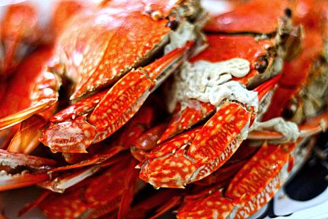 新鲜梭子蟹怎么保存