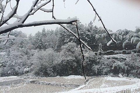 关于小雪节气古诗词有哪些