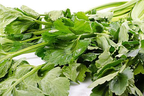 芹菜叶什么人不适合吃