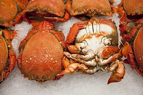 梭子蟹怎么挑选
