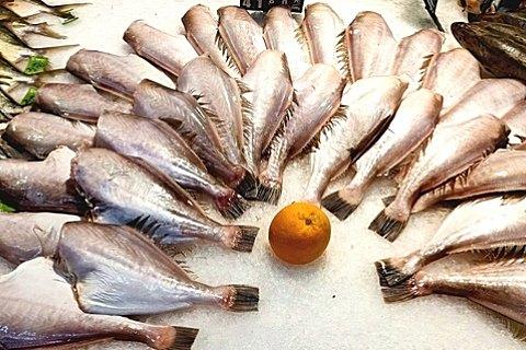 马面鱼和扒皮鱼的区别