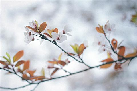 立冬短信祝福语