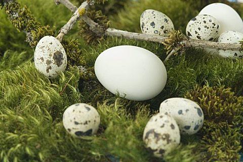 鹅蛋怎么做最好吃 鹅蛋这些吃法你见过吗