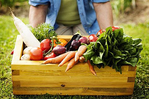 龙须菜是野菜吗?晒干的龙须菜怎么吃?