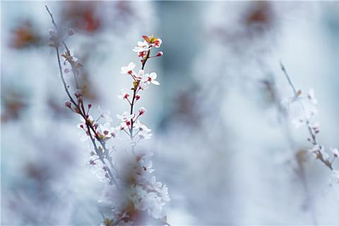 大雪节气的祝福短信,祝大家开心